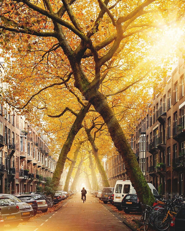 Lomanstraat Allee in Amsterdam, Niederlande