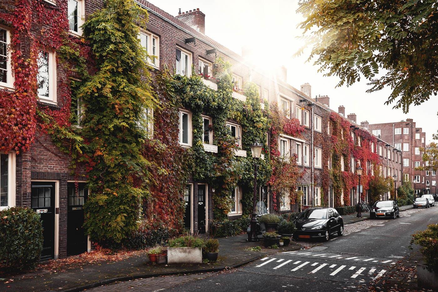 Begrünte Fassaden in Amsterdam, Niederlande