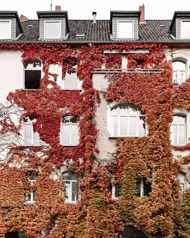 Begrünte Fassade in Hannover im Herbst